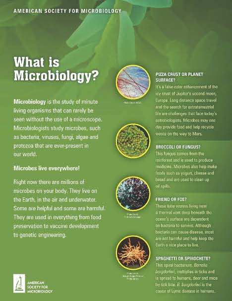 poster gratis what is microbiology